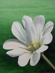 Hornkraut, Acryl, 2009, 30x40