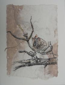 I - und ah (Gottesanbeterin), Fineliner auf handgeschöpfter Baumwollfaser, 2002, 21x29