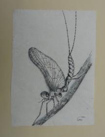 I - und ah (Eintagsfliege), Fineliner auf handgeschöpfter Baumwollfaser, 2002, 21x39