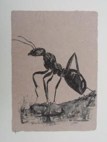 I - und ah (Ameise), Fineliner auf handgeschöpfter Baumwollfaser, 2002, 21x29