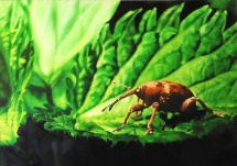 Eichelbohrer, Acryl auf Keilrahmen, 2014, 100x70